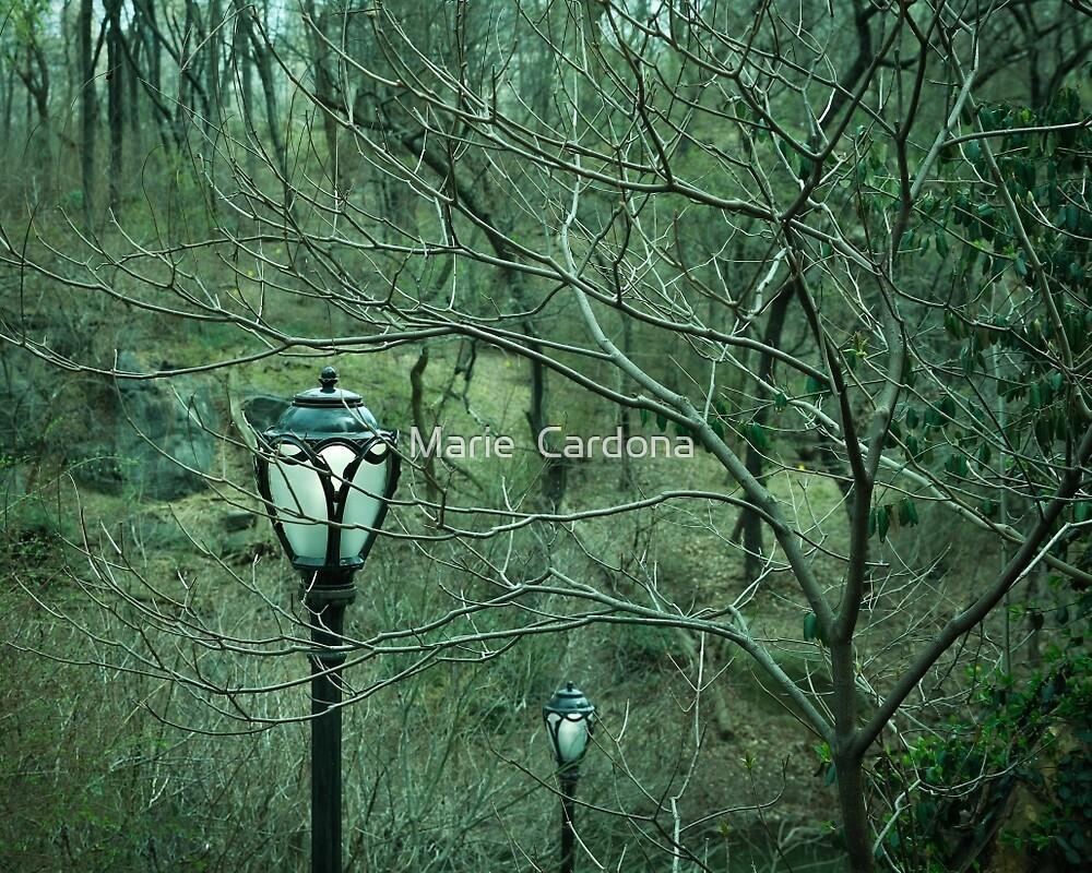 Woods Dark and Deep by Marie  Cardona
