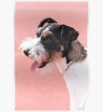 cute dog Poster