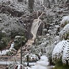 Snow at steavenson falls . by Donovan Wilson