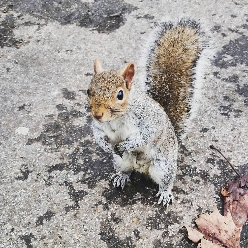 Squirrel by FallenStarlite