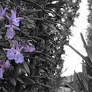 Lavender by SenpaiAden