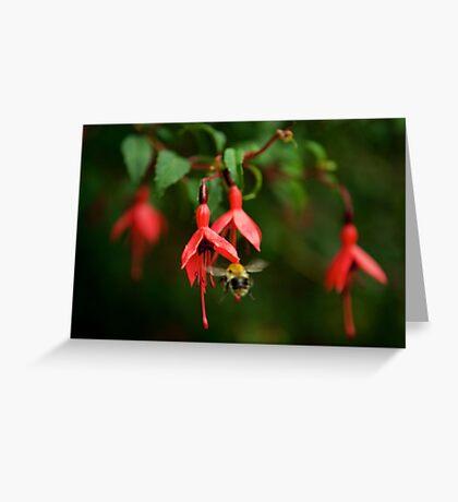 Fuchsia at Loch Na Fooey (wide) Greeting Card