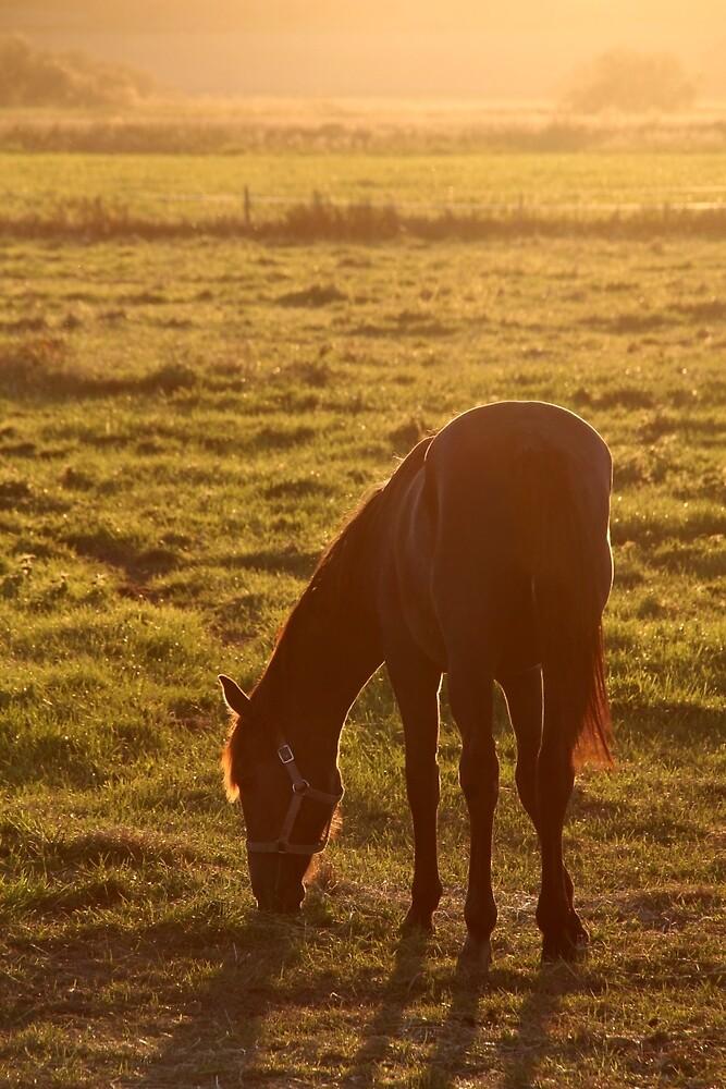 7.9.2016: Horse on Pasture II by Petri Volanen