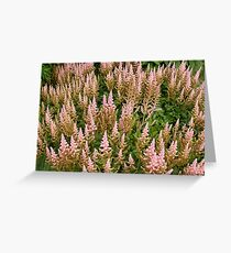Pink Magnificence Reaching for the Sun! Greeting Card