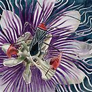 Passion Flower by acquart