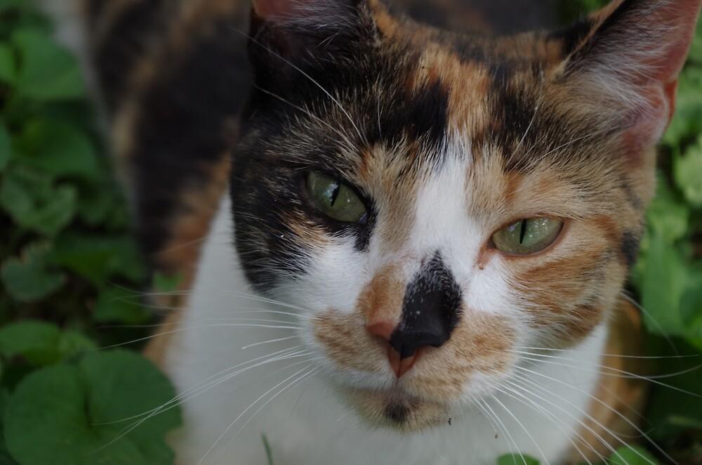 Sweet calico cat by SuperHeroArt