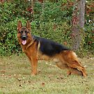 Rocco Standing by Sandy Keeton