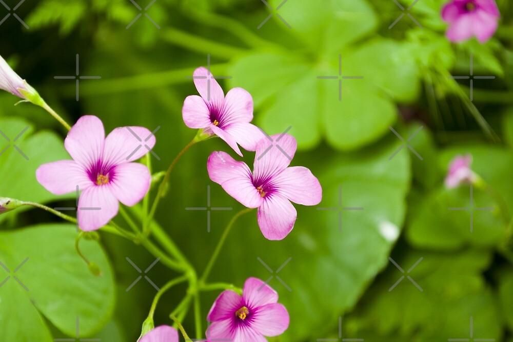Flower by selma-mcleod