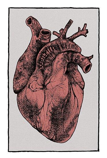 Pósters «Corazón anatómico» de Emmi Eriksson | Redbubble