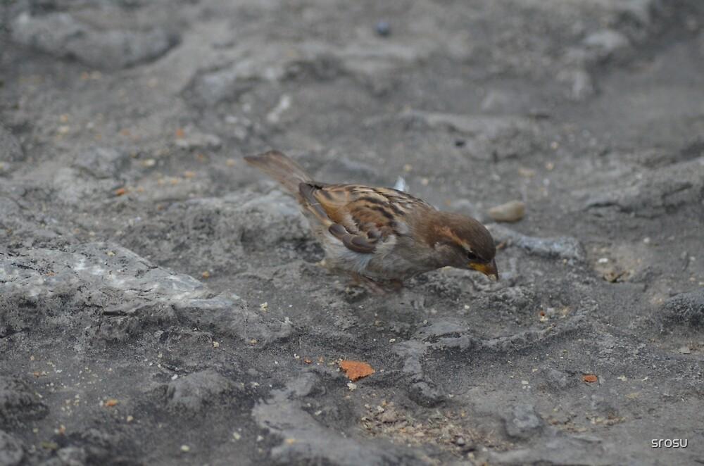 Bird and Stone by srosu