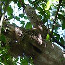 Sloth in a Tree by godtomanydevils