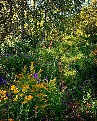 Meadow by allie-keech