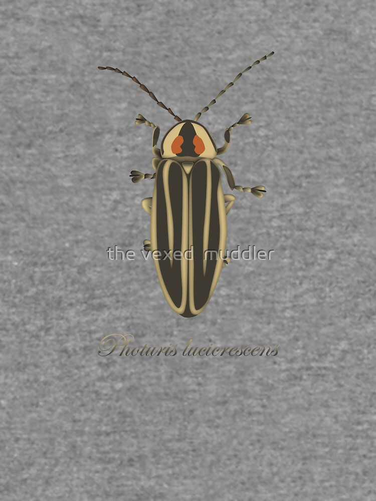 Firefly - Photuris lucicrescens by thevexedmuddler