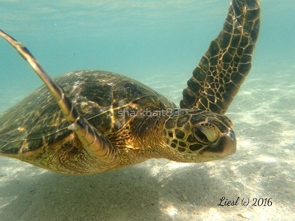 Sea Turtle Swimming by sharkbait83