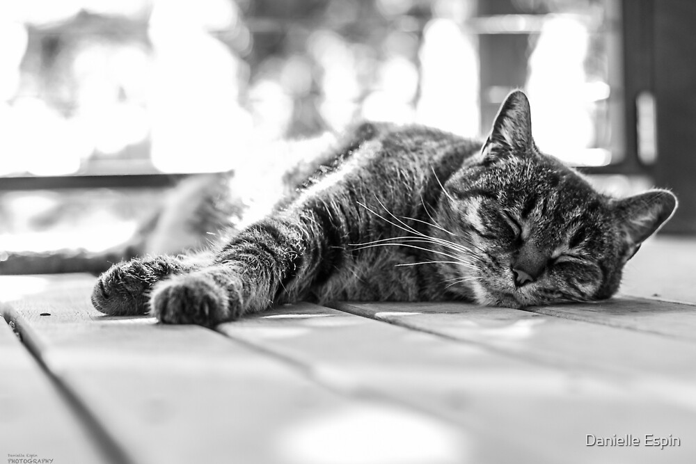Relaxing on the Verandah by Danielle Espin