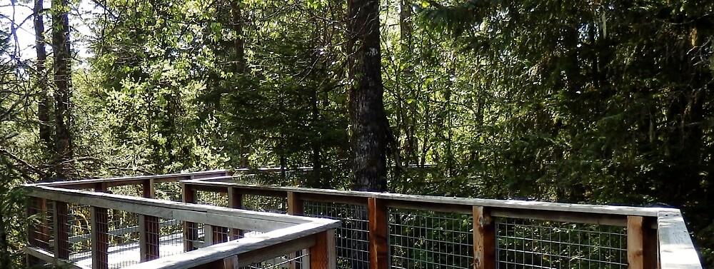 Zen Path Through the Forest  by nancyart