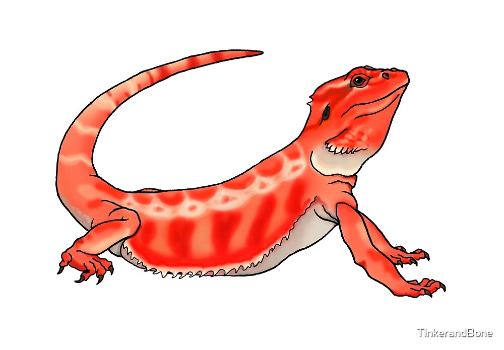 Red Bearded Dragon by TinkerandBone