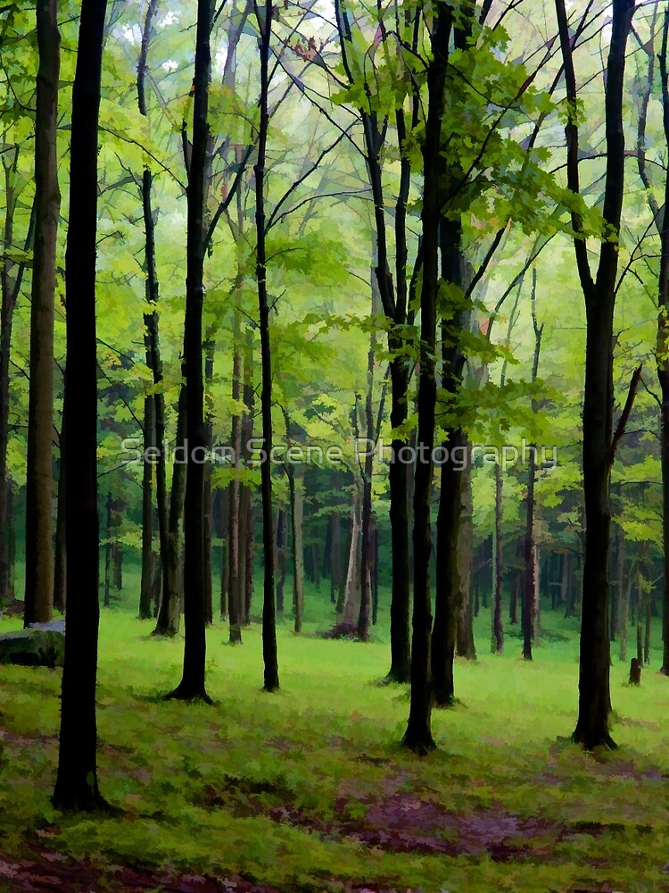 Into the Trees by Seldom Scene Photography