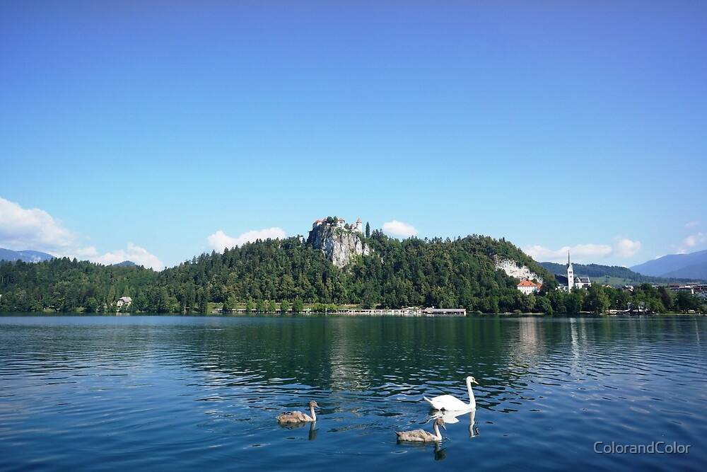 swans in Bled, Slovenia  by ColorandColor