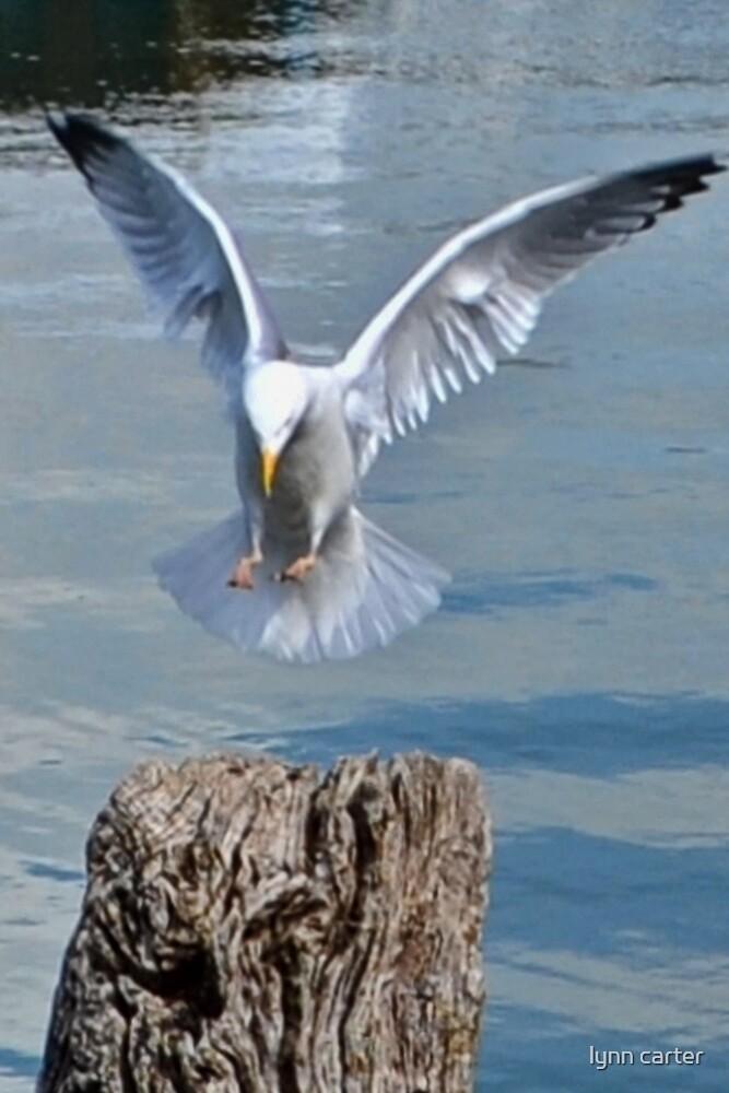 Landing Gear Down by lynn carter