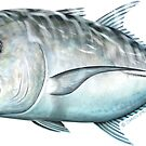 Giant Trevally by David Pearce