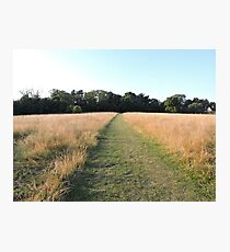 Golden Grasses: Path of Dreams Photographic Print
