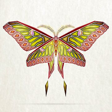 moth by Manoou