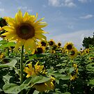 Dancing with Sunflowers by Janice Heppenstall