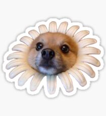 Doggo Stickers: Flower Doggo Sticker