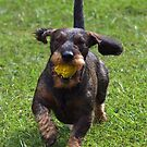 Come on, let's fetch !  by Bine