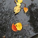 walking in the rain by jayview