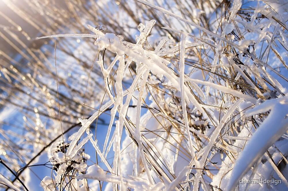 Winter Grass by cinema4design