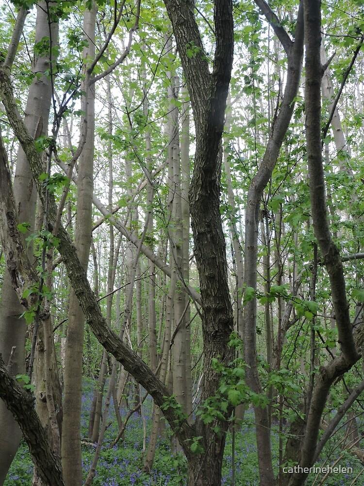 woodland by catherinehelen