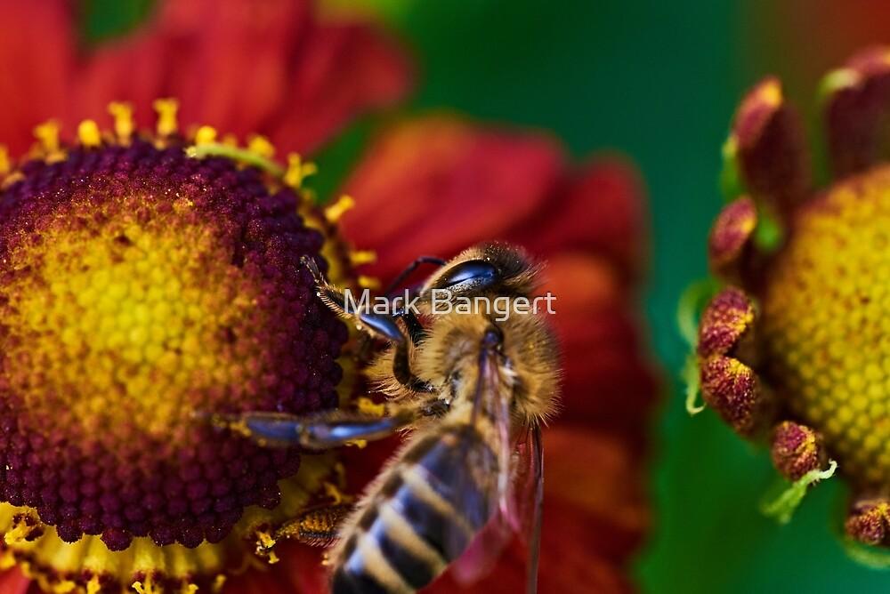 Bee on red flower by Mark Bangert
