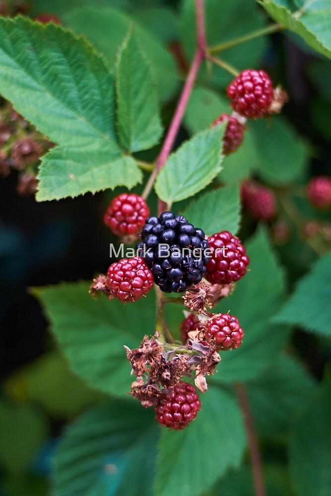 Blackberry by Mark Bangert