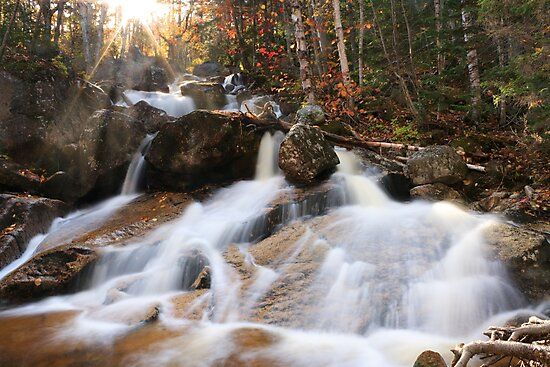 Lower Zealand Falls, White Mountains, New Hampshire by Daniel Brown