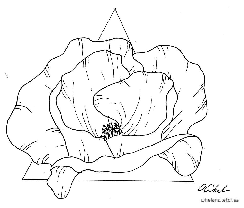 Poppy by whelansketches