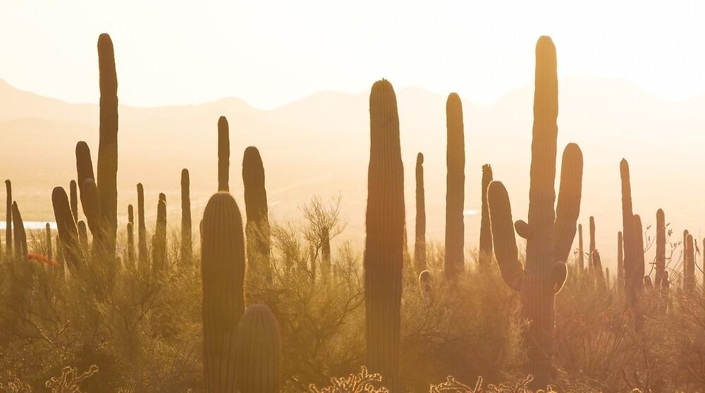 Amazing Sunset Image of Saguaro National Park by jose1983