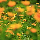 Yellow Blur by Adam Kuehl