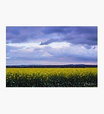 Canola Fields, Sunbury, Victoria, Australia Photographic Print