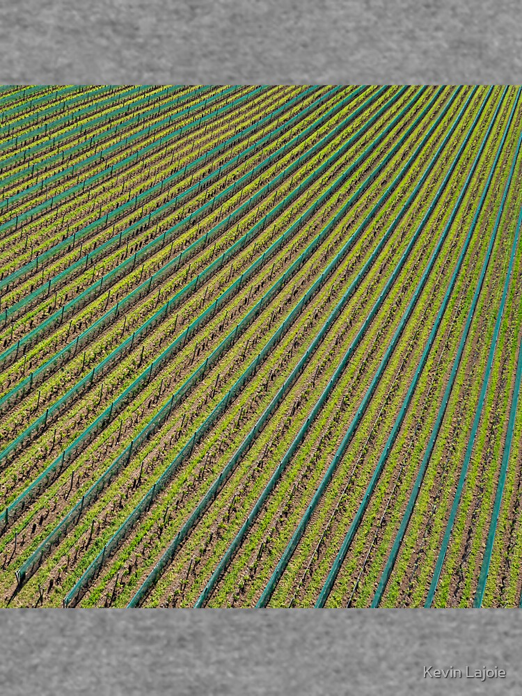 Vineyard by KAPgsy