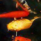golden pond koi by lastgasp