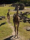 Giraffe Mom and Baby Calf by ValeriesGallery