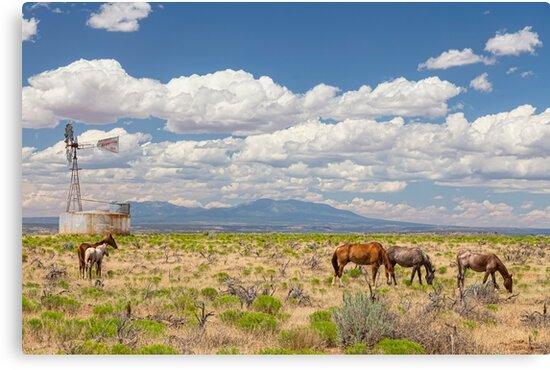 Open Range Wild Horses Grazing by Bo Insogna