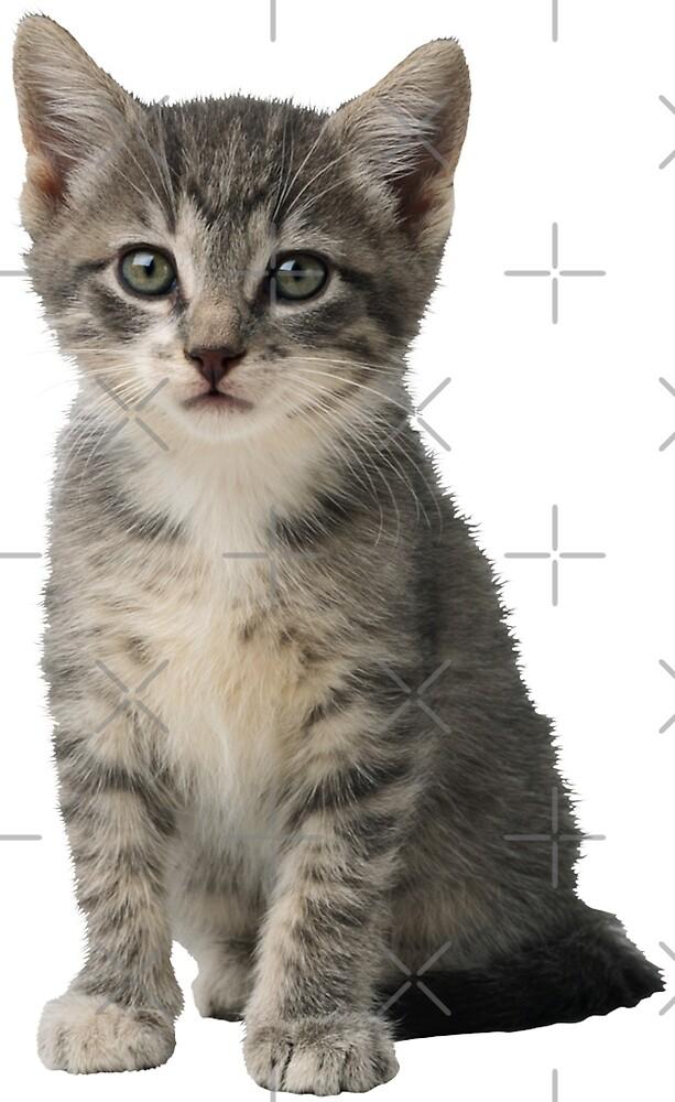 Kitten by yumi108