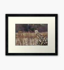 Short-eared Owl on a Stump Framed Print