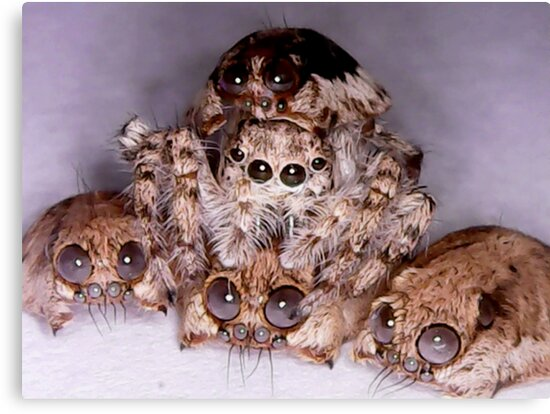 jumping spider hides between spider skulls by yousef99