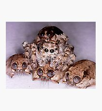 jumping spider hides between spider skulls Photographic Print