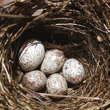 Bird nest by T-Nours