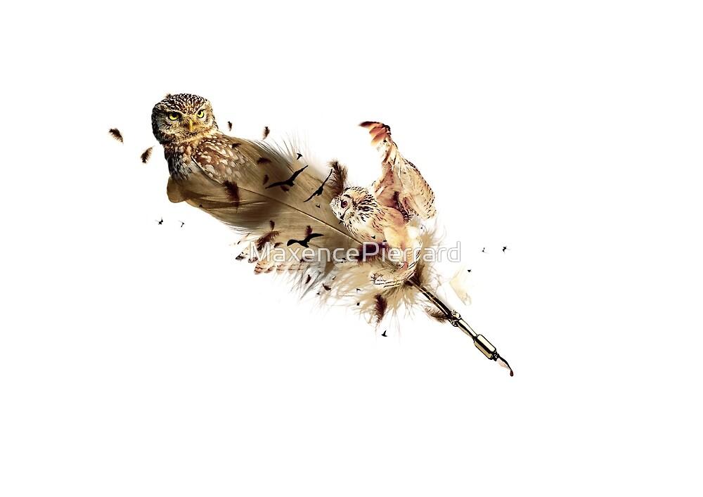 Owl - Feather by MaxencePierrard